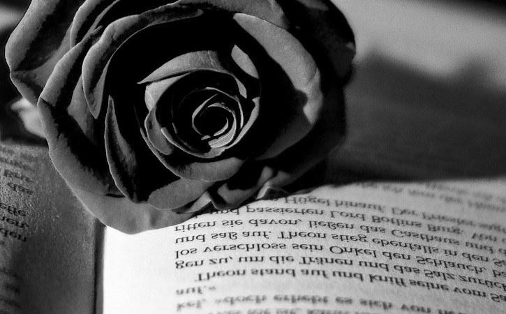 rosa negra palabras de condolencia y pesame